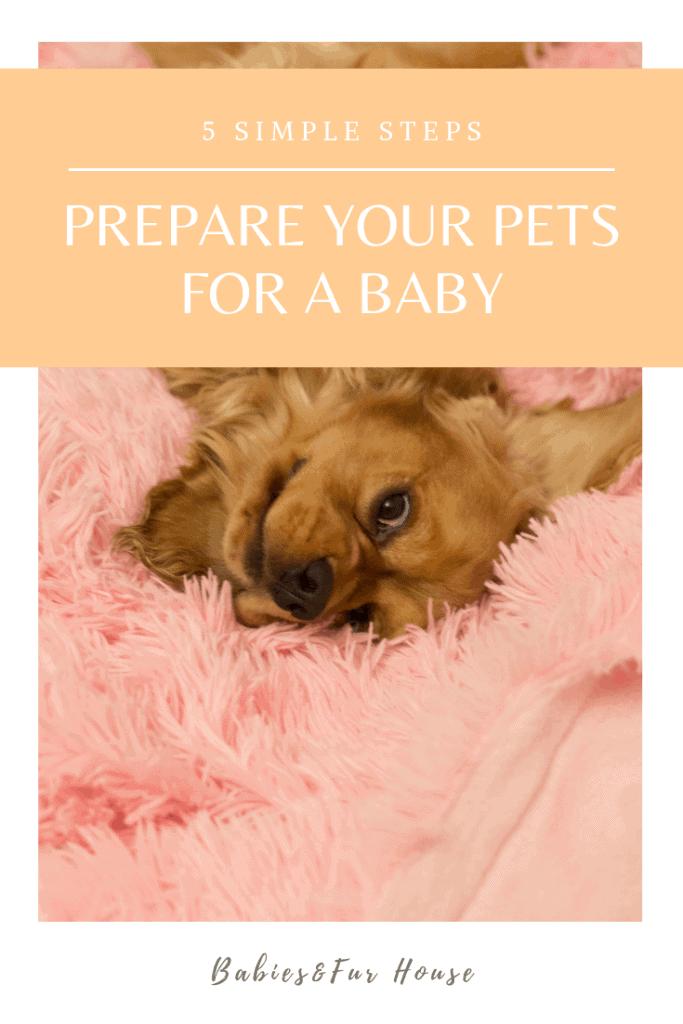 How To Prepare Pets For A Baby #newborn #preparingpets #babiesandpets #preparingforbaby