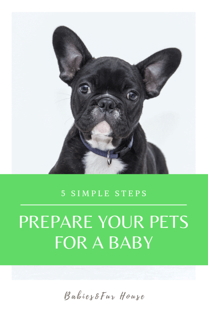 How To Prepare Pets For A Newborn #newborn #preparingpets #babiesandpets #preparingforbaby
