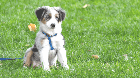 Puppy Vet Schedule: What to Expect