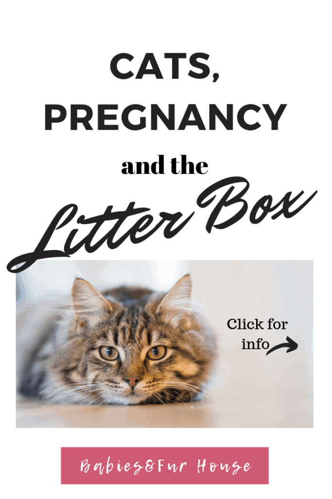 Cleaning The Litter Box While Pregnant