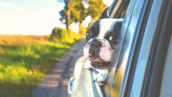 Keep Your Pet Cool This Summer: Genius Products