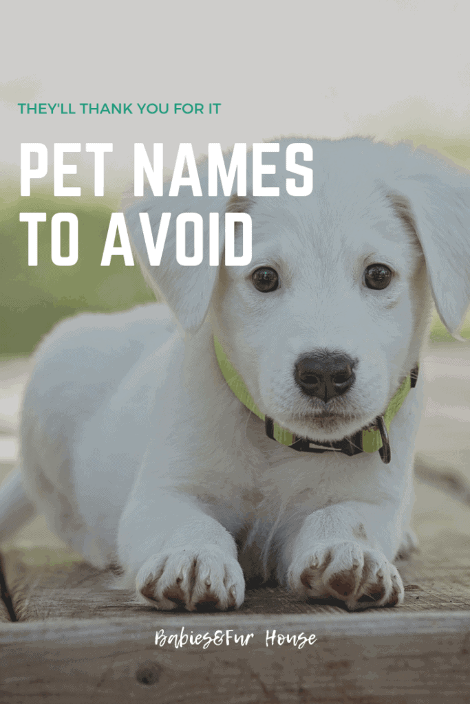 Pet Names To Avoid #overusedpetnames