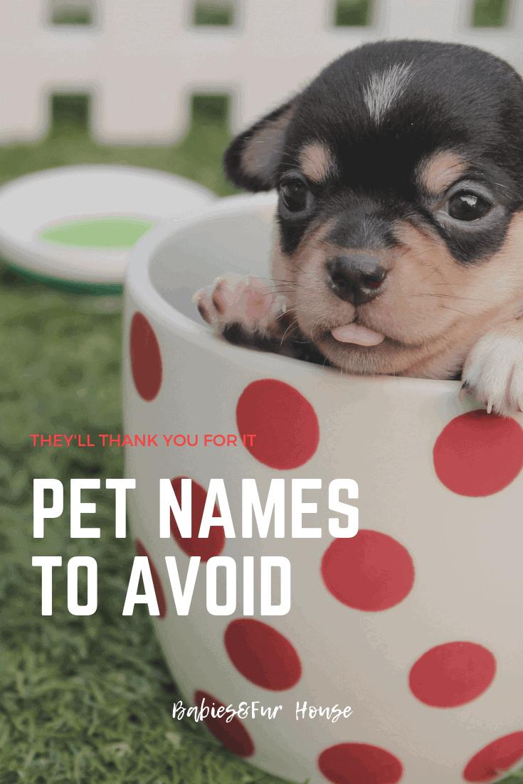 Pet Names To Avoid #pets #newpet #newpuppy #newkitten