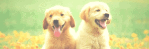 Pet Names To Avoid: They'll Thank You For It