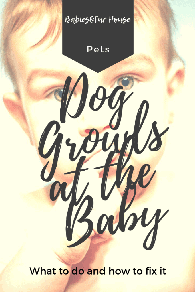 What To Do If The Dog Growls At The Baby #babiesandpets #newborn #petissues #petaggression #dogaggression #familypet