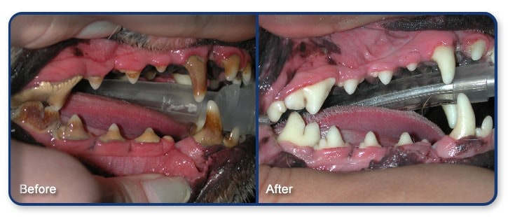 Cleaning Dogs Teeth Without Brushing