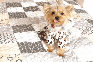 Gifts For Dog Lovers: Something To Bark About
