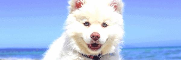 Puppy Diarrhea: Quick Solutions