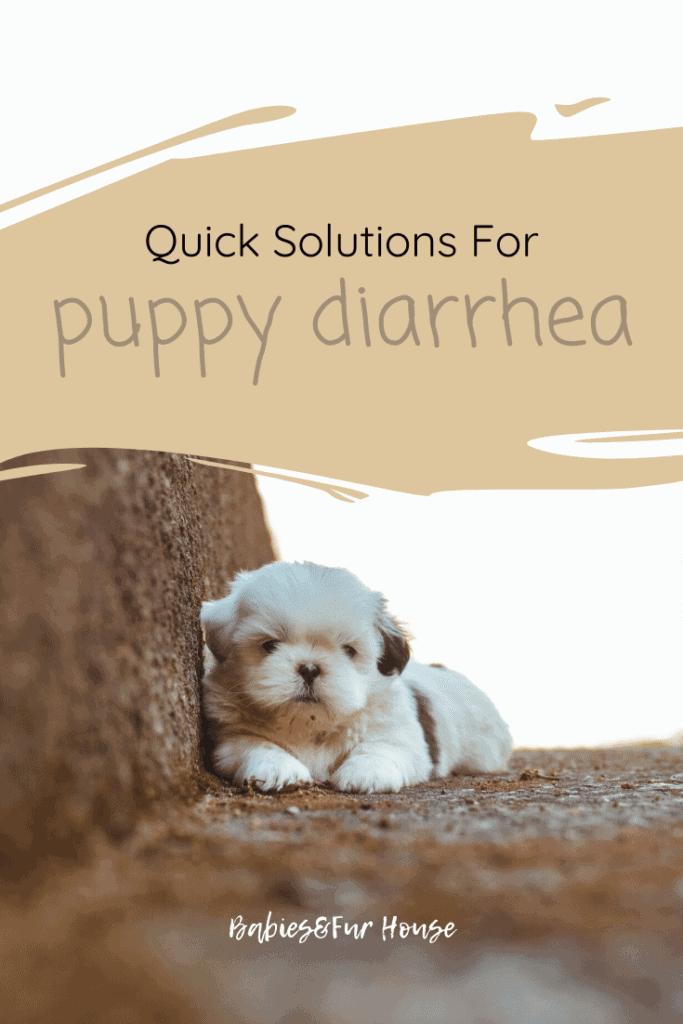 Puppy Diarrhea: Quick Solutions #puppy #newpuppy