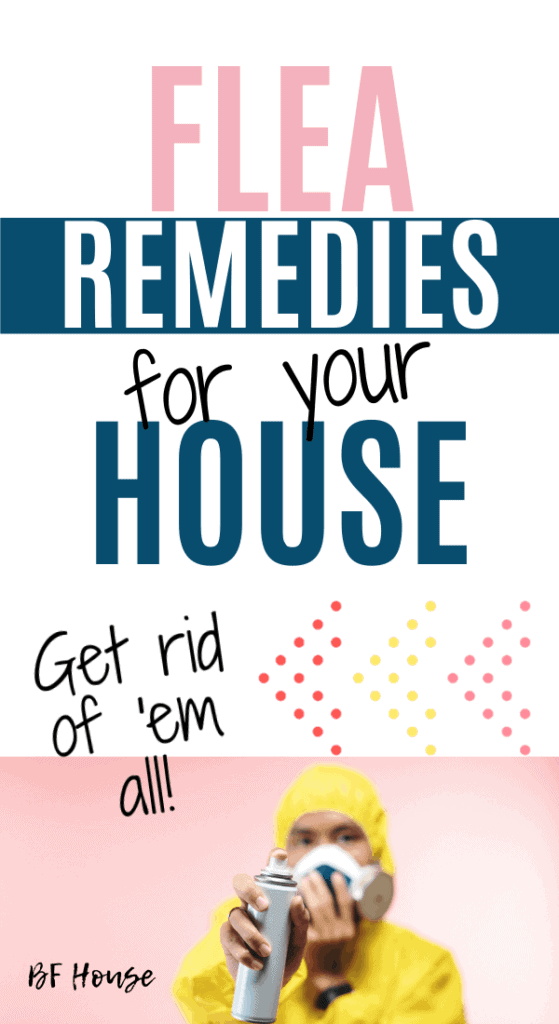 Flea Remedies For The House. They're on more than just the dog.
