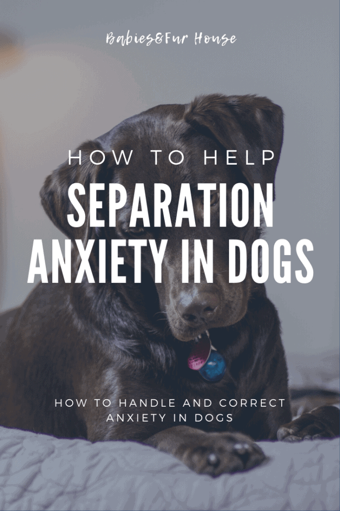 Separation Anxiety in Dogs: How To Help #petanxiety #doganxiety