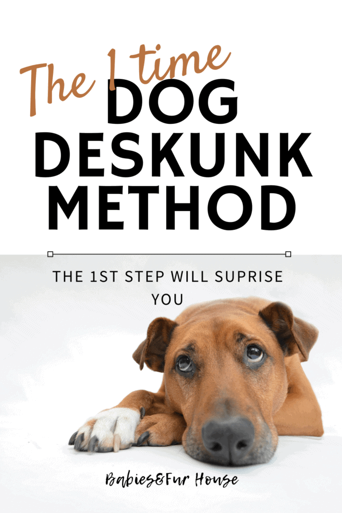 The 1 Time Dog DeSkunk Method. Know what to do if it ever happens. #1 will surprise you! #skunk #dogstink #skunkseason #outdoordog #deskunk