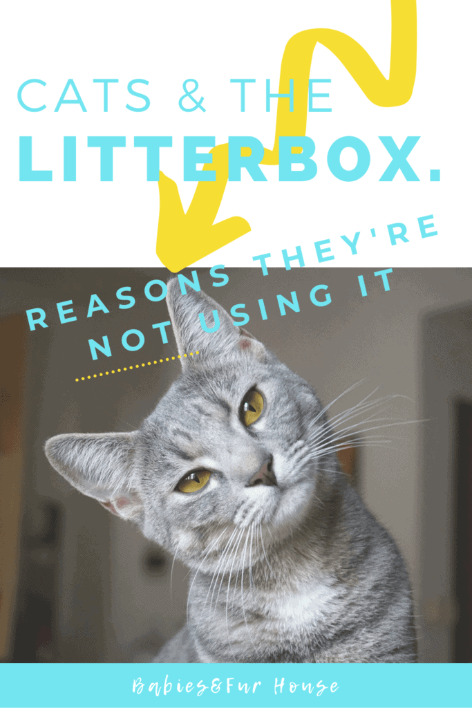 Cat Is Peeing Outside The Litter Box: Reasons they're NOT using it #caturine #cathealth #catproblems #litterbox #litterboxissues