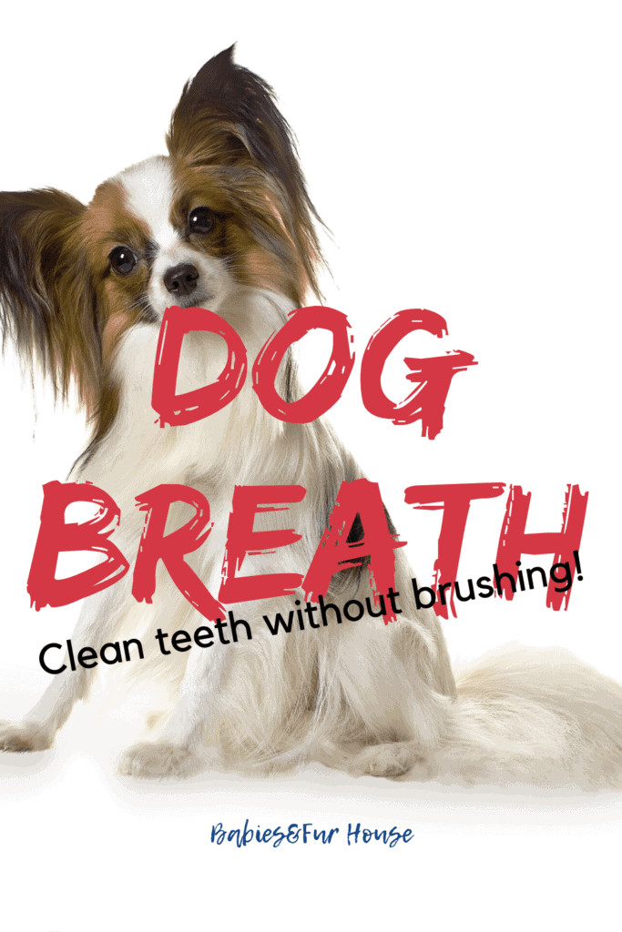 Cleaning Dog's Teeth Without Brushing: Refreshing Dog Breath #dogbreath #k9 #doghealth