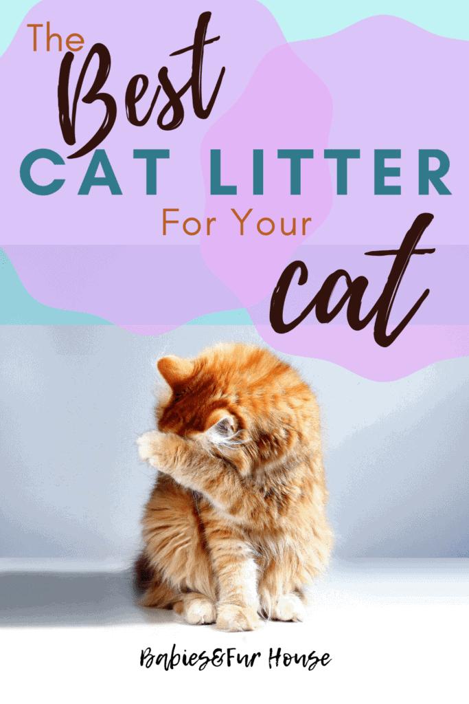 The Best Cat Litter For Your Cat #catlitter #litterbox #newkitten #newcat #bestcatlitter