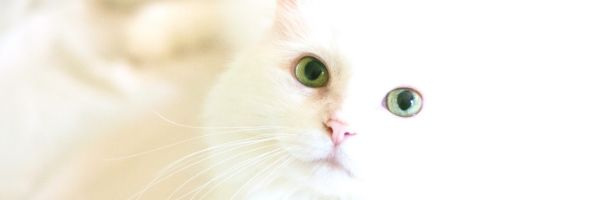 Keep A Clean Litter Box: Control Tracking & Scatter