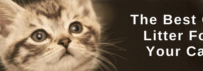 Best Cat Litter For Your Cat