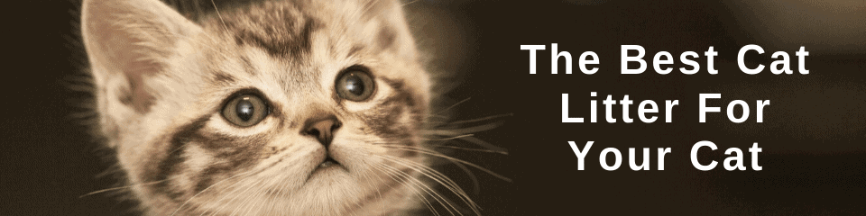 The Best Cat Litter For Your Cat