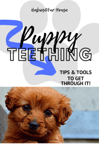 Puppy Teething: Tips And Tools To Get Through It #puppyteething #puppyteethingtips #puppyteethingtools