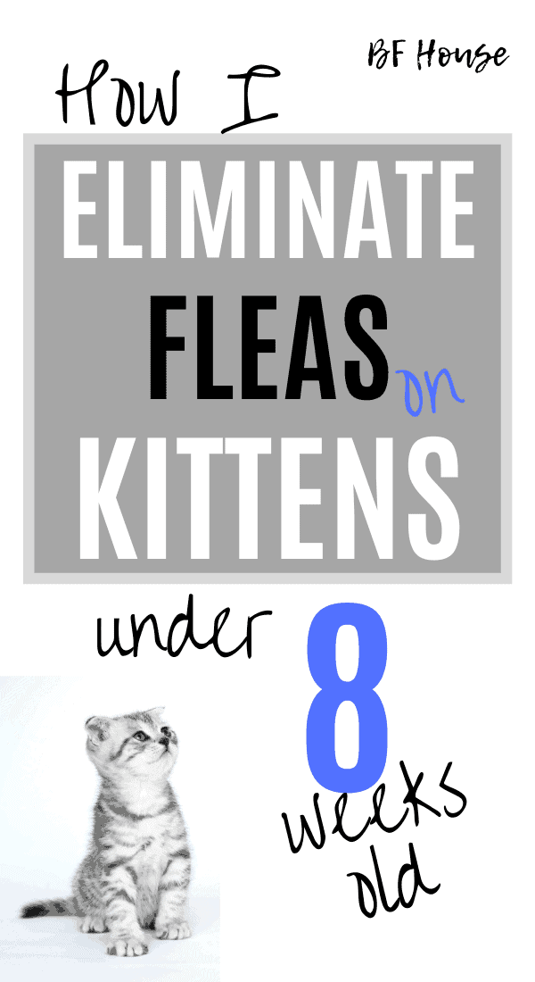 How I Eliminate Fleas On Kittens. Treatment for kittens with fleas under 8 weeks of age.
