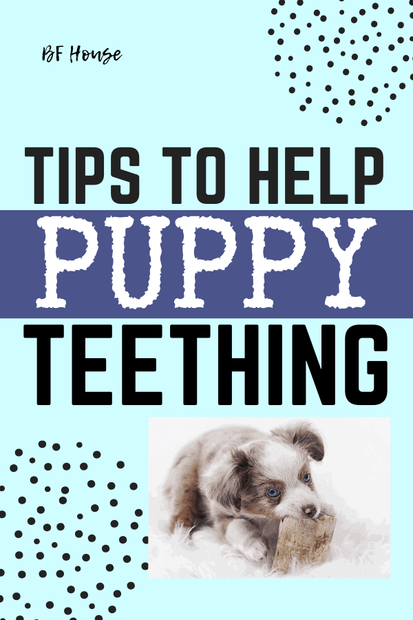 Tips To Help Puppy Teething. Get all the hacks for handling puppy teething.