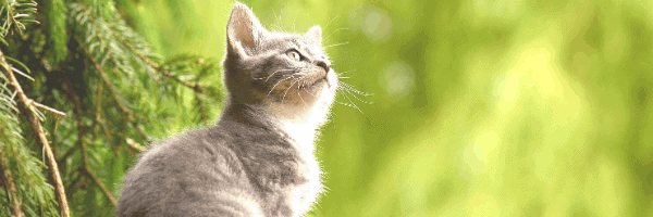 Health Monitoring Cat Litter for Urinary Issues