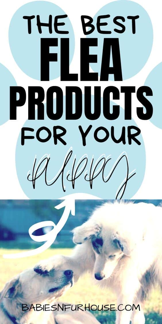 Best Flea Products