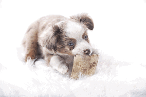 Ear Mites In Dogs: Remedies From Home