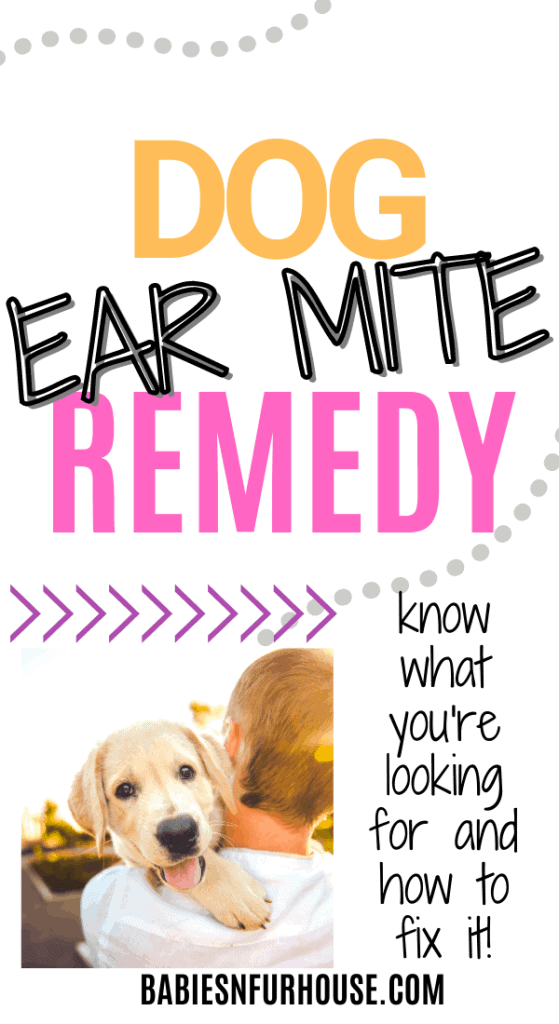 ear mites in dogs remedies
