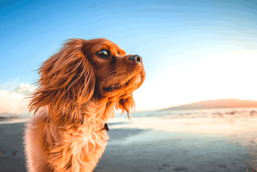 The Best Flea Products For Dogs