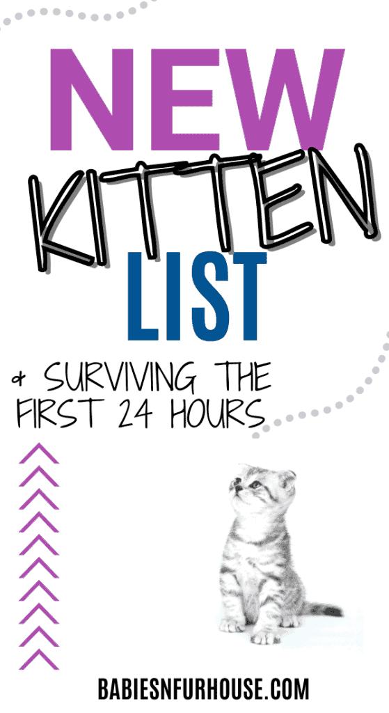 new kitten list