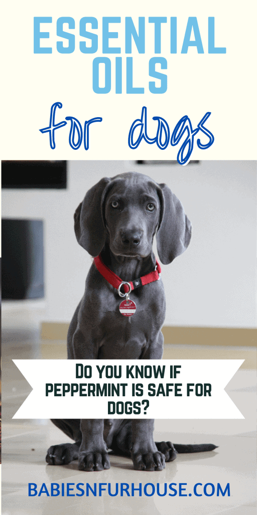 Essential Oils For Dogs: What's Safe To Use