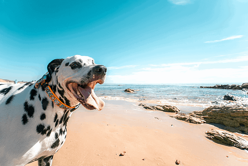 Essential Oils For Dogs: What Is Safe To Use