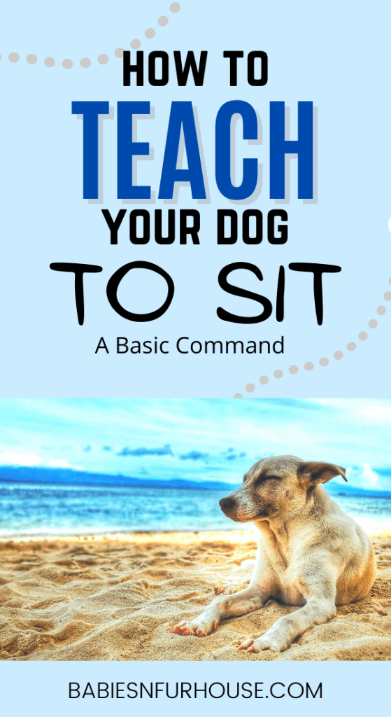 How To Teach Your Dog To Sit: A Basic Command