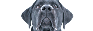 Human Foods To Feed Your Dog: Healthy Dog Treats