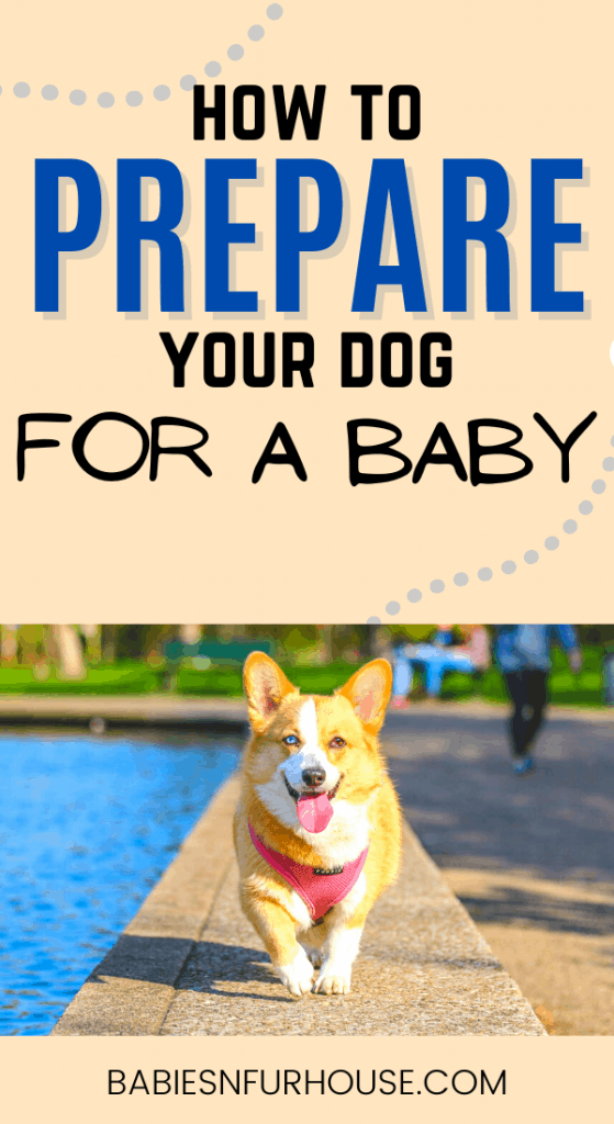 Prepare Dogs For A Baby: How To Set The Foundation