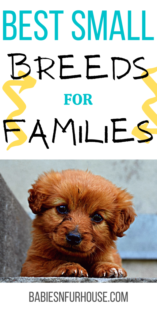 Best Small Breed Dogs For Families