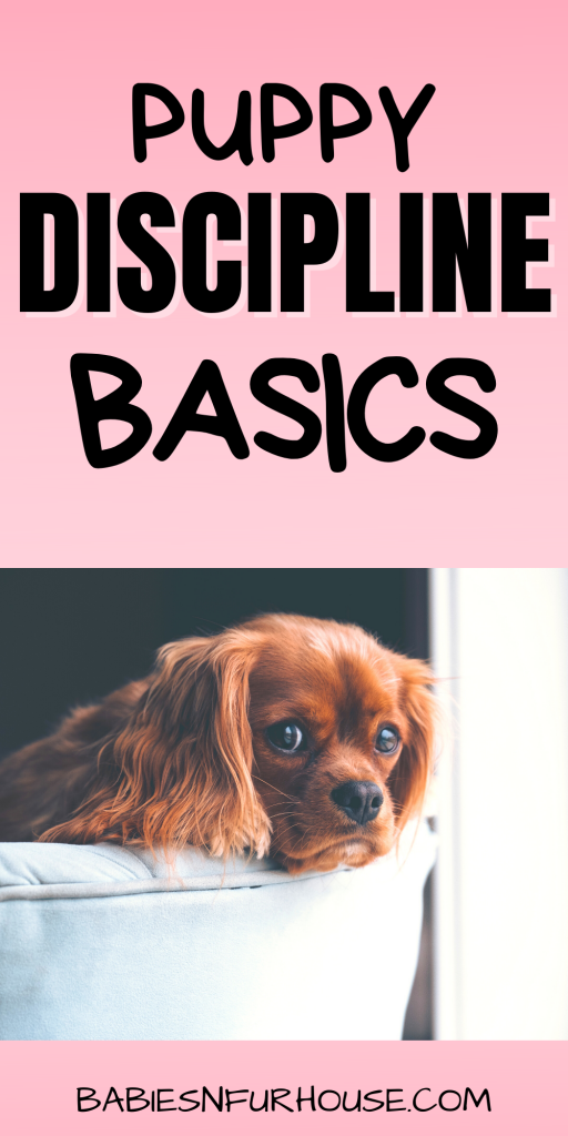 Disciplining A Puppy: The Basics Behind Training