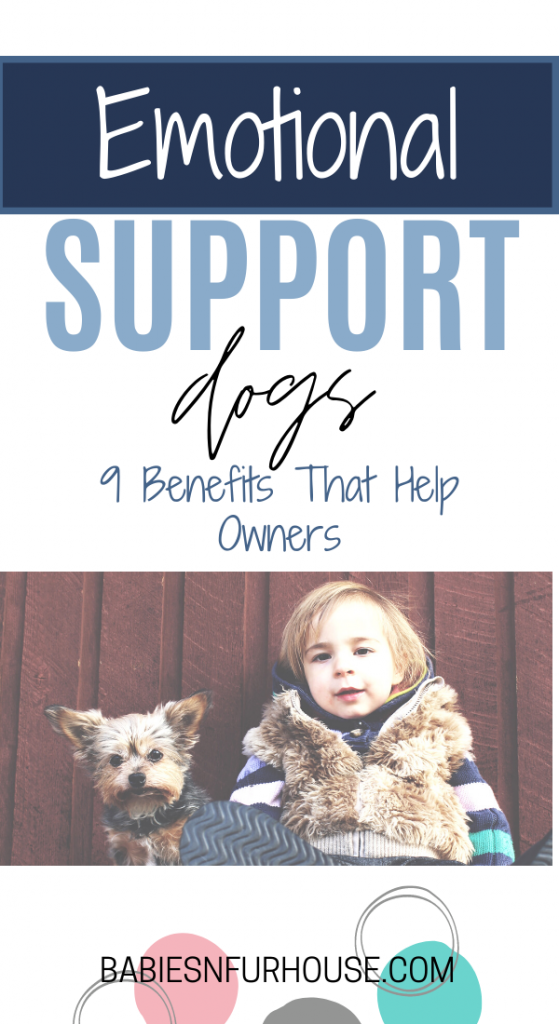 Emotional Support Dog: 9 Benefits That Help Owners