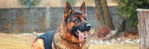 Heatstroke In Dogs: Signs, What To Watch For & What To Do