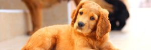 Pet Proofing Your Home: Keep Them Safe